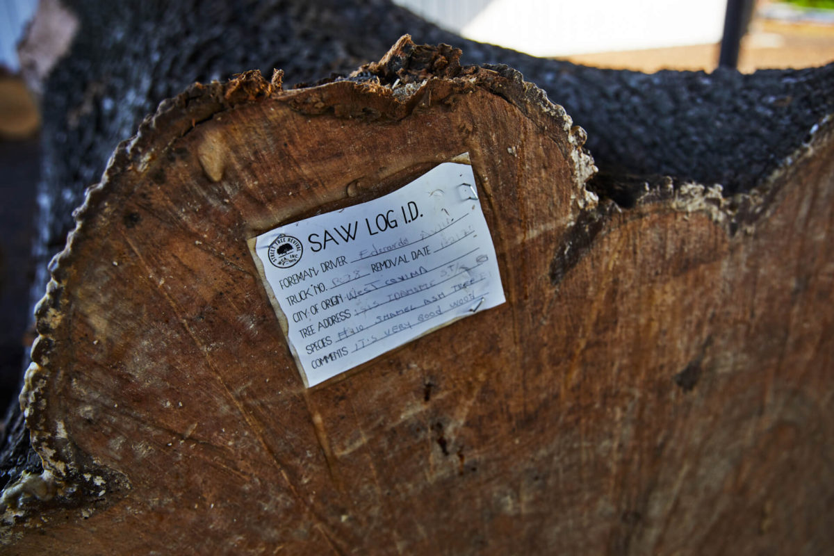 close up of ash tree log with handwritten note